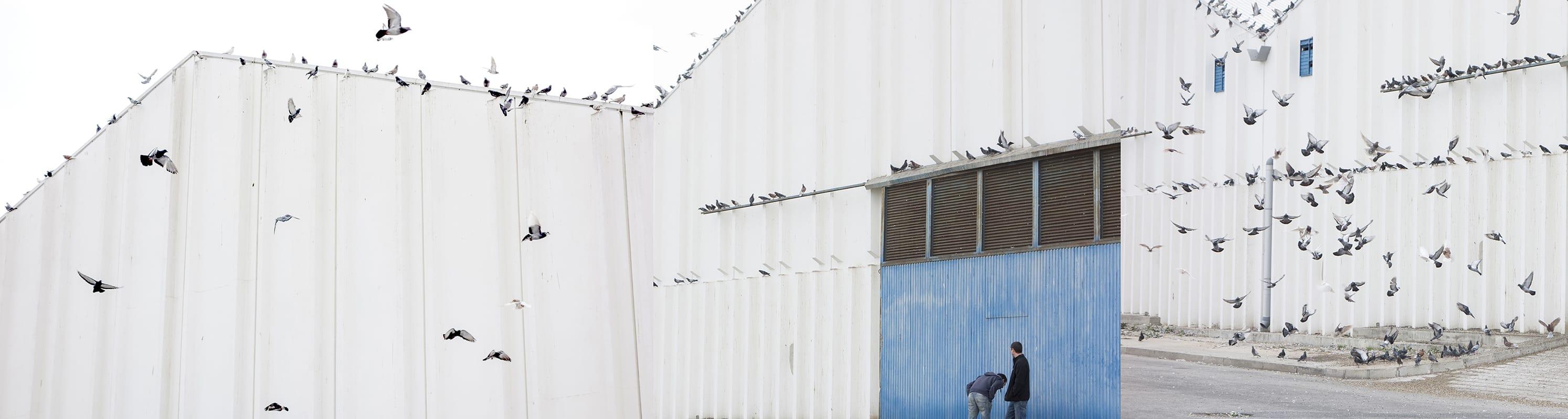 Hangar y palomas 2014